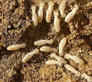 Termite Inspection Akron
