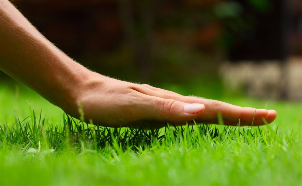 Touching grass | Prestige Home Inspections | lawncare Akron